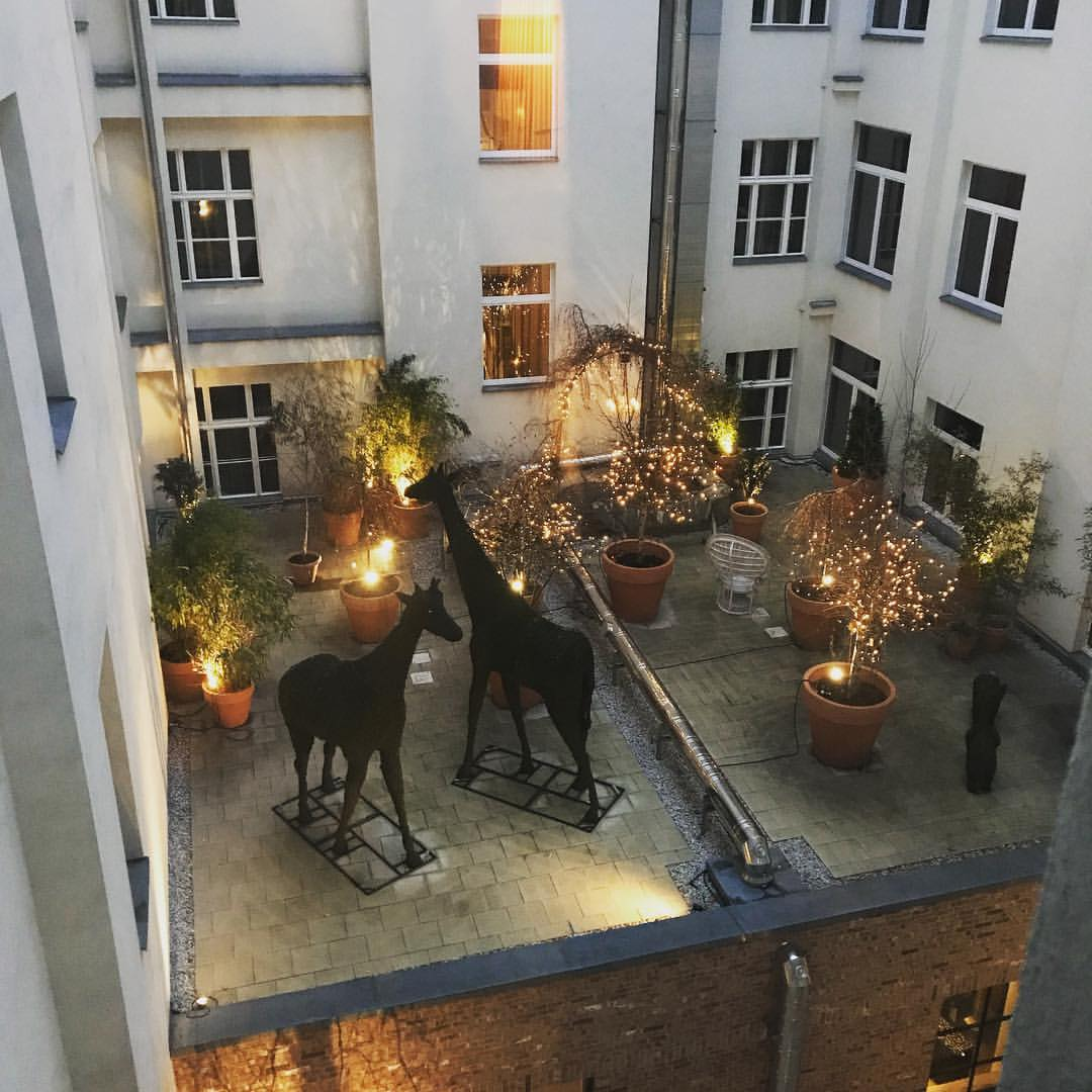 Hotel Zoo living up to its name with a pair of giraffes o...